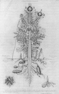 Plant_Archetype