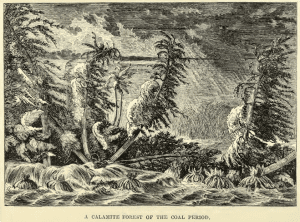 A Calamite Forest of the Coal Period