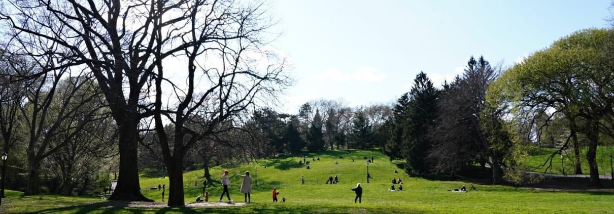 Central Park on New York City
